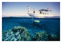 Red Sea Padi Diving